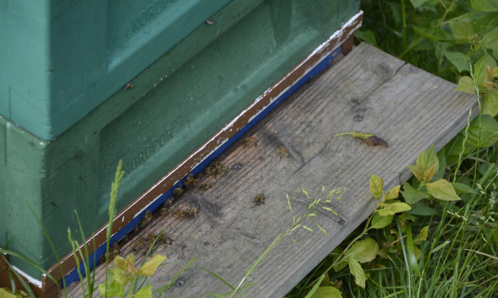 Bienen arbeiten hart im Bienenstock für Zucker